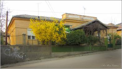 Photo: Ploaia de aur (Forsithya)  din Turda, Str. Salinelor, Nr. 2 - 2019.04.05