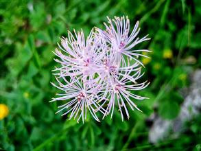 Photo: Der Austiegsweg ist von zahlreichen Blumen gesäumt.