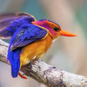 Slip by JD Lotz - Animals Birds