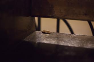 Photo: Lonely peanut shell, New York City