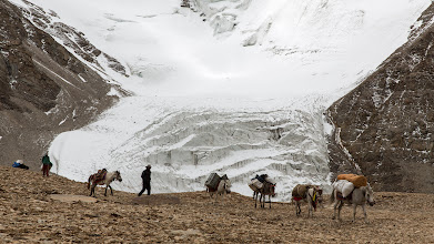 Photo: Our star horse and mule team at 6000m, arriving at our Lungser Kangri high camp. Other teams all have their favourite place to high camp, some even on the 6200m col.