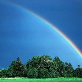 rainbow by Allan Wallberg - Nature Up Close Water ( nature, rainbow,  )