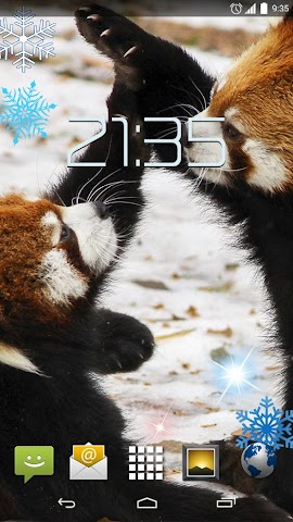 android Red Panda 4K Live Wallpaper Screenshot 4