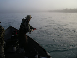 Photo: A client of Alaska Drift Away Fishing trying to land a Kenai rainbow trout on foggy September morning.