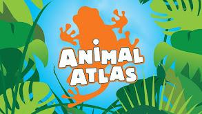 Animal Atlas thumbnail