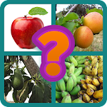 Guess the fruit Icon