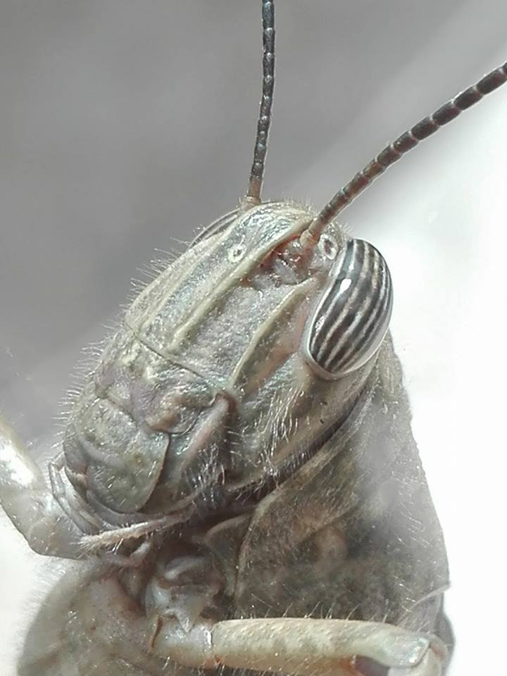 Locust di Michele Tambornino