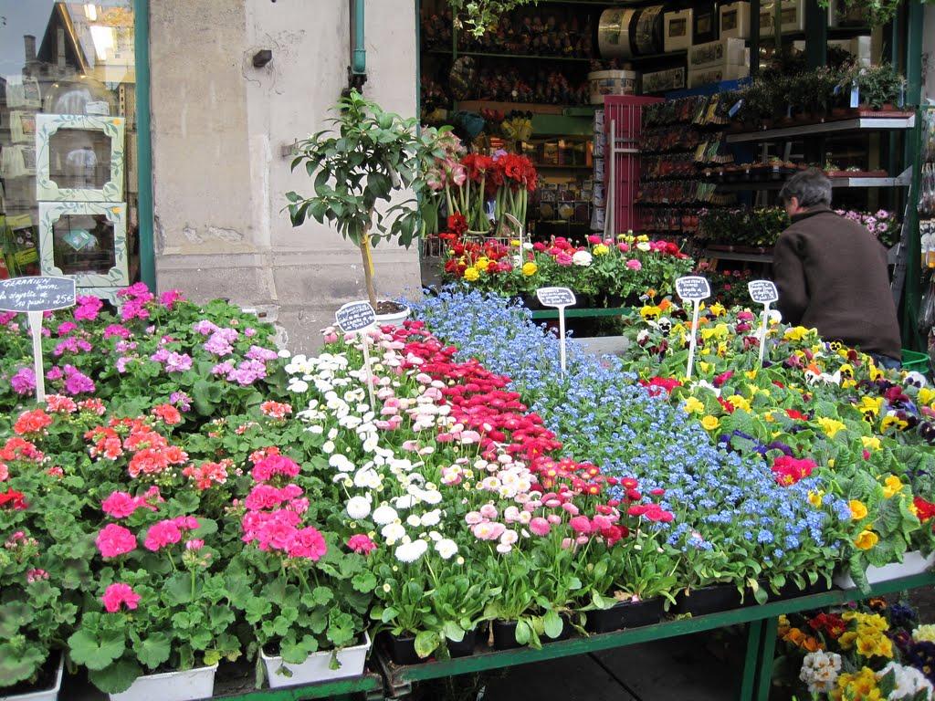 Photo: Магазин цветов для оформления балконов на дор. Жоржа Помпиду