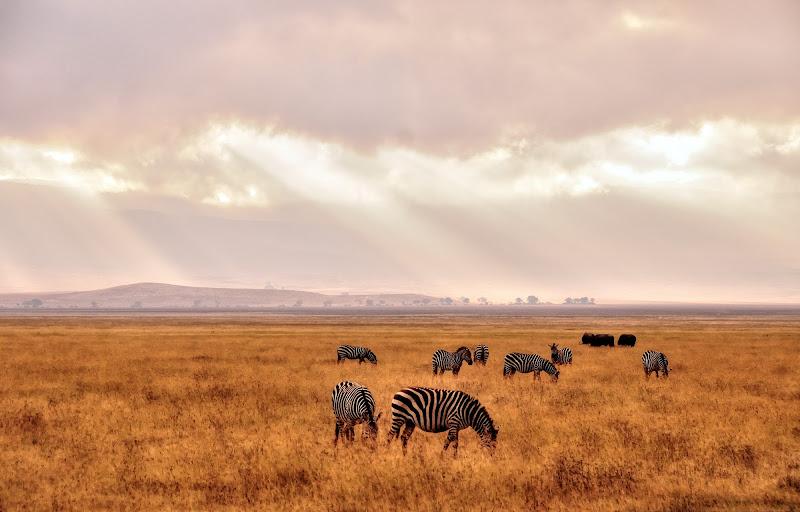 Mal d'Africa di vitomaso