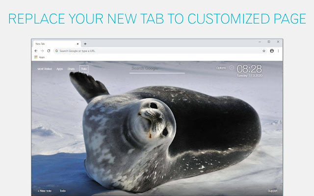 Seal Wallpapers Seals New Tab - freeaddon.com