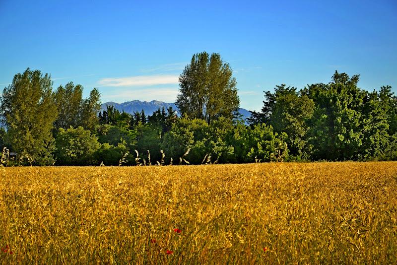 Vista con Montagna, grano e papaveri di Ilmagaphotos