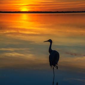 Sunset Silhouette by Joe Saladino - Landscapes Sunsets & Sunrises (  )