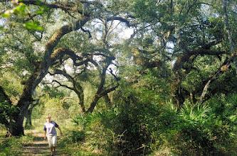 Photo: 2A101170 FL - Withlacoochee River Park – drzewa obrośnięte hiszpańskim mchem