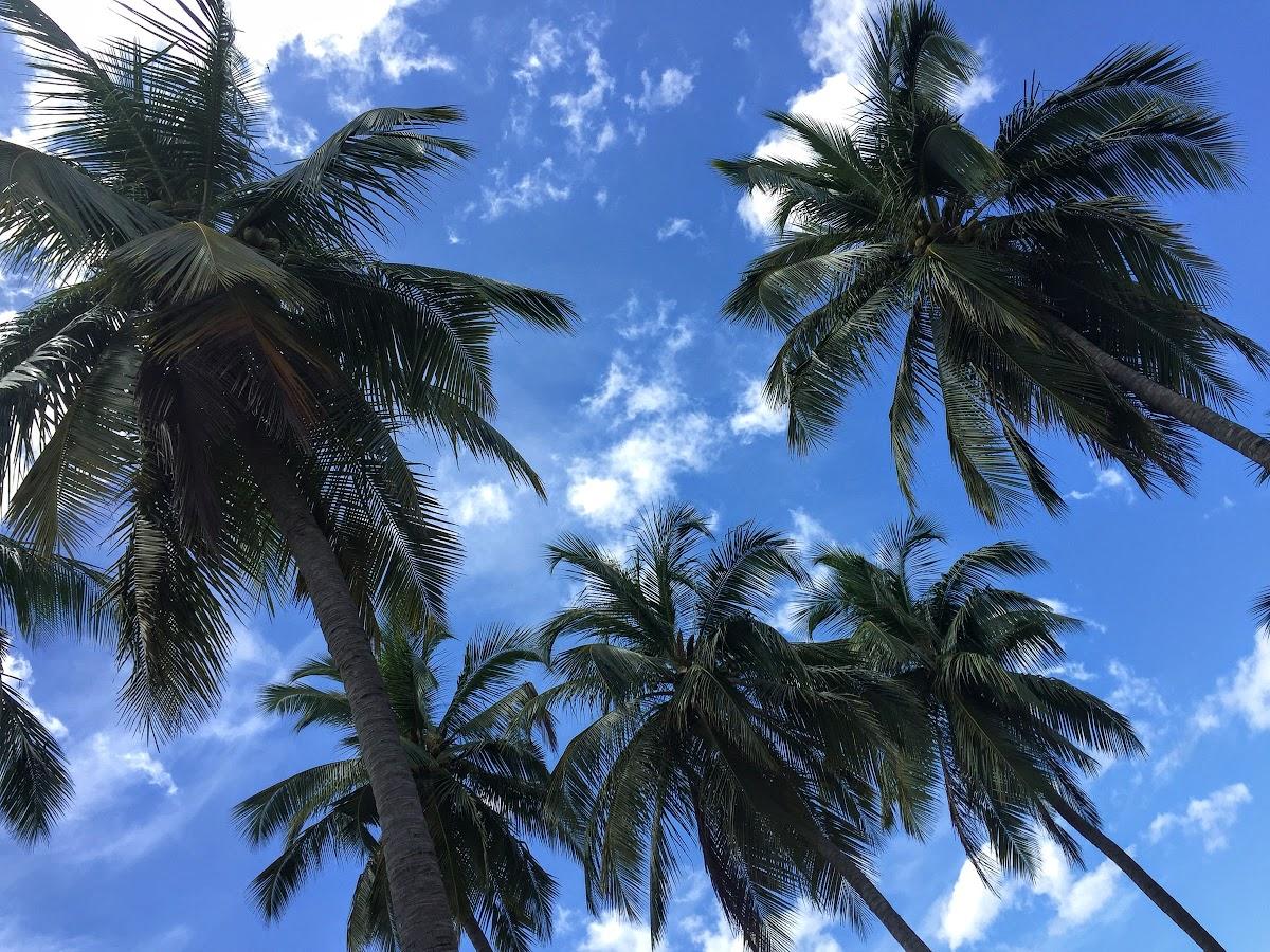 Sri. Lanka Kalpitiya Valampuri Resort. Coconut trees for the perfect tropical feel.