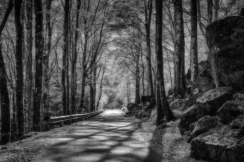 La strada nella foresta di Sergio Locatelli