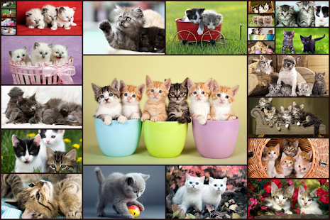 Cats Jigsaw Puzzles Games - For Kids & Adults 😺- screenshot thumbnail
