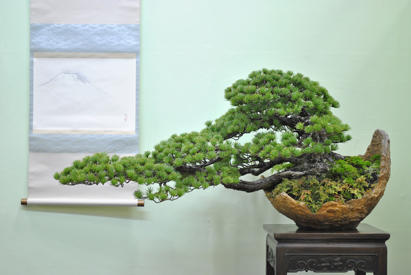 Photo: One of the stunning Bonsai trees on display at the TaikanTen.  For more images see: http://www.bonsaiempire.com/gallery/taikanten-2011