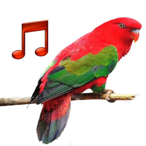 Bird sounds Ringtones