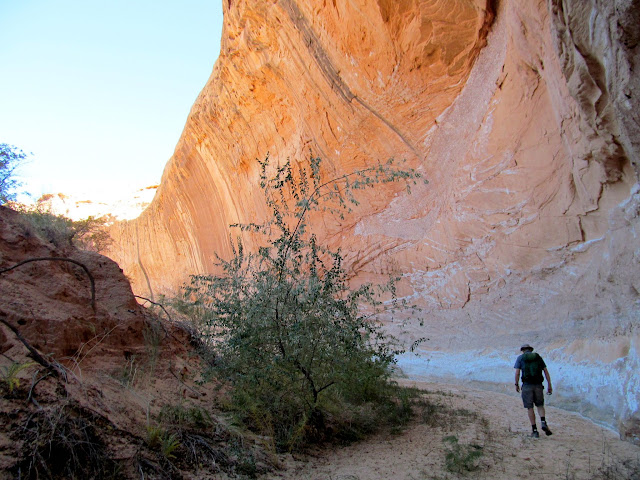 Hiking up an unnamed canyon between Buck and Pasture