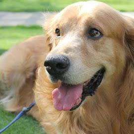 Dog by Harsh Bhatia - Animals - Dogs Portraits ( loyal, friend, animal, dog, dog portrait,  )