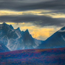 Morning In Denali Park by Patricia Phillips - Landscapes Travel ( alaska parks denali morning )