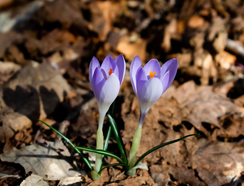 Ecco...spuntar la primavera di BeatriceCapone69