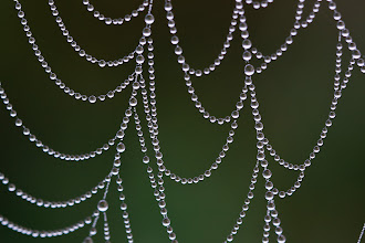 Photo: Here's another spiderweb photo from Monday, a bit more abstract than the last one I posted