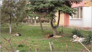Photo: Turda - Calea Victoriei - Bloc B16  - 2019.03.23