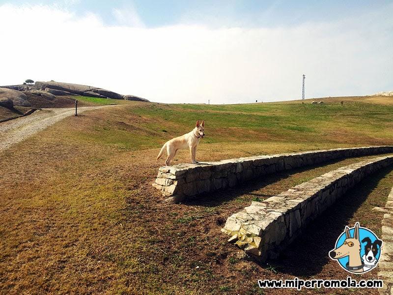 Senderismo con Perro en el Parque de Benz, A Coruña con un Can de Palleiro y un Border Collie