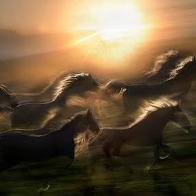 morning gallop by Milan Malovrh - Animals Horses (  )