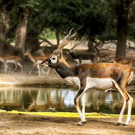 by Abdul Rehman - Animals Other Mammals