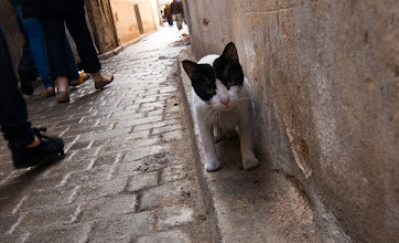 Photo: One of the many cats in Morocco.  The strays are very well looked after and friendly