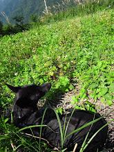 Photo: 黑狗娜娜躺在蕎麥田的冬陽中發懶