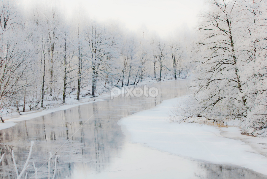 Winter by Edit Peterffy - Landscapes Forests ( threes, winter, cold, snow, white )