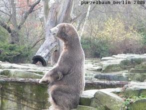 Photo: Da schaut Knut doch gleich noch einmal genauer hin ;-)
