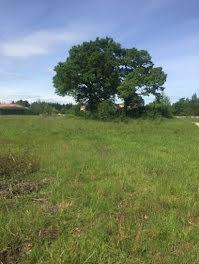 terrain à Pibrac (31)