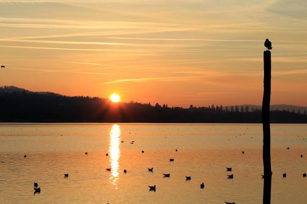 lago di Varese di alice_pasquini