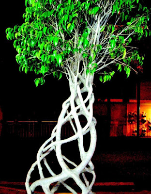 Intrecci d'albero di BananaJoe