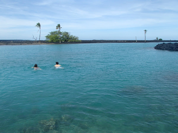 Swimming to Turtle Island