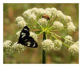 Photo: Eastern Sierras-20120717-792
