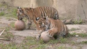 Precious Predators thumbnail