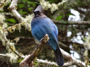 Photo: The blue bird