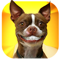 Grin Dogs Smile Live Wallpaper icon
