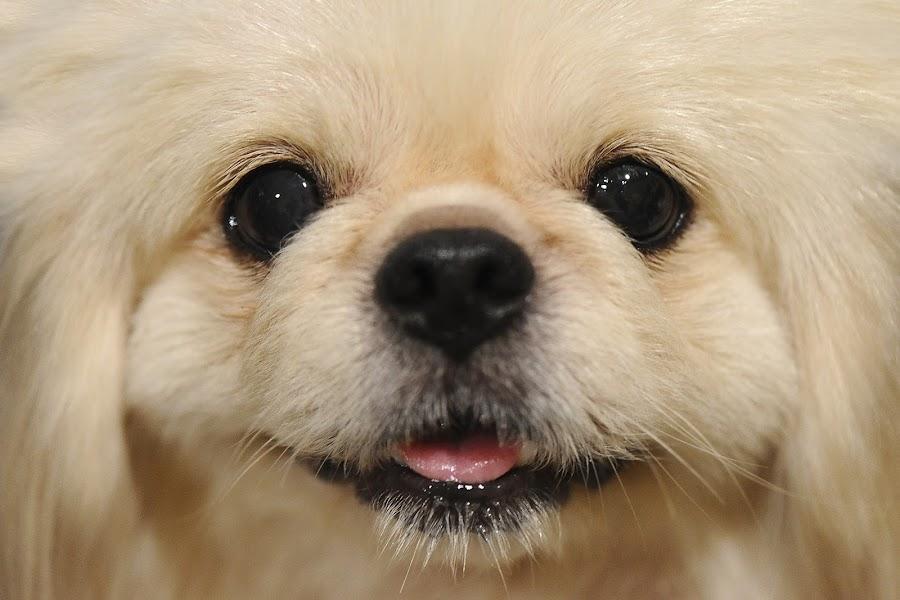 Smiling dog by Jeremy Mendoza - Animals - Dogs Portraits ( mans best friend, animal, portrait, dog, pet, smile,  )