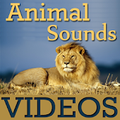 Animal Sounds With VIDEOs