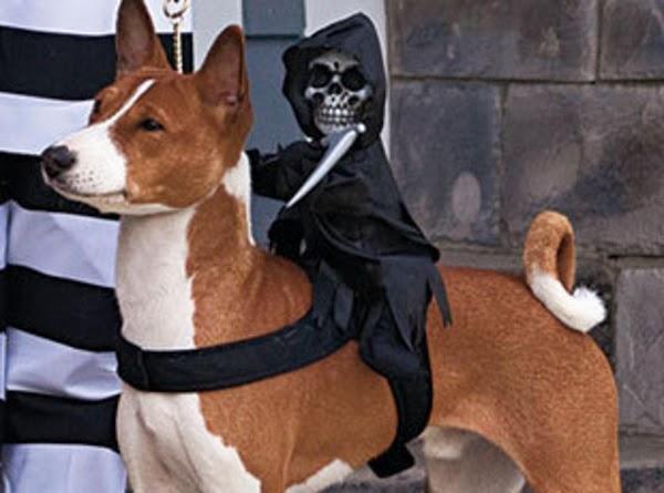 Halloween Pet Costumes Recipe