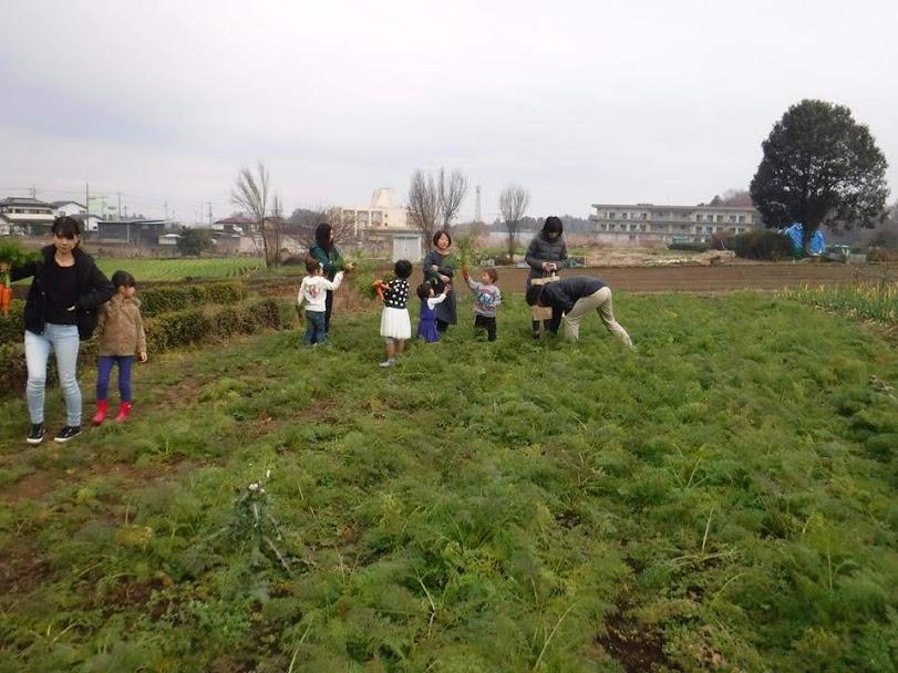 この日は、畑に行こうよ!のメンバが多かったので、みんなで畑で収穫もしました。この時期の人参はとってもおいしいんです。