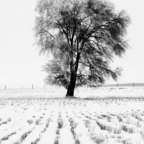 Snowy Field In Winter by Brian Robinson - Nature Up Close Trees & Bushes