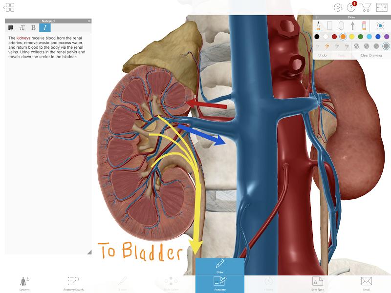 Human Anatomy Atlas 2020: Complete 3D Human Body APK Cracked Free