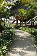 Photo: Path to 3 bedroom beach house